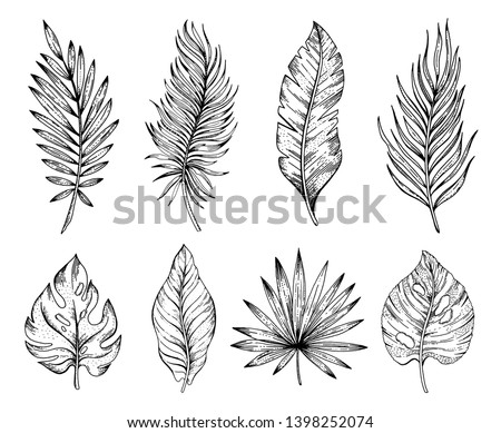Palm tropical leaf set, hand drawn sketch. Exotic forest tree icon. Realistic vector illustration isolated on white background. Black ink line handdrawn art. For temporary tattoo, t shirt print