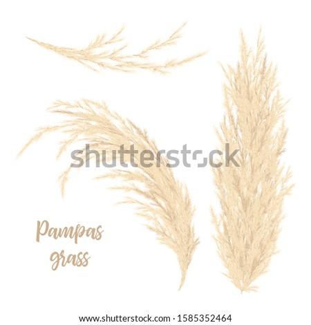 pampas grass golden vector
