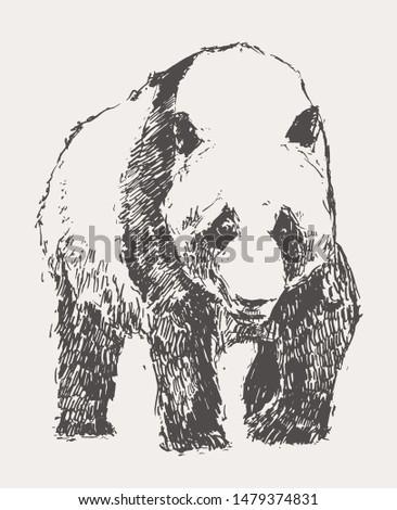 Panda hand drawn vector illustration, sketch