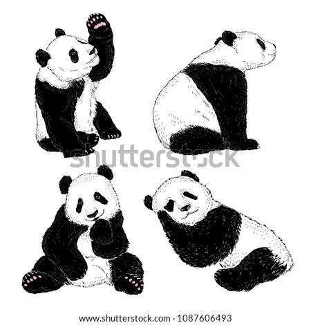 panda illustrations set