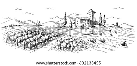 panorama coffee plantation landscape in graphic style hand-drawn vector illustration.