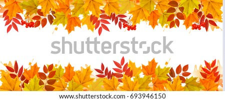Panorama Fall Autumn Colorful Leaves Background. Vector.