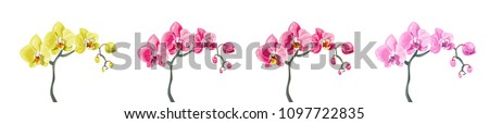 Panoramic view set Phalaenopsis orchid branches: pink, red, yellow flowers on white background. Digital draw tropical plants in watercolor style, vector botanical illustration for design