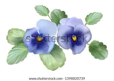 Pansies. Violets. Bouquet of flowers. Botanical vector detailed illustration