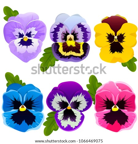 Pansy. Set of spring flowers. Bright flowers and leaves. Collection. Flower elements. Vector illustration