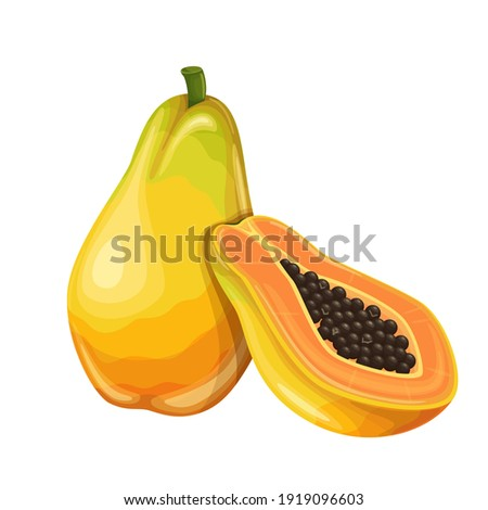 Papaya fruit vector illustration in cartoon style. Healthy nutrition, organic food, vegetarian product. Stockfoto ©