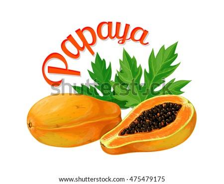 papaya vector illustration