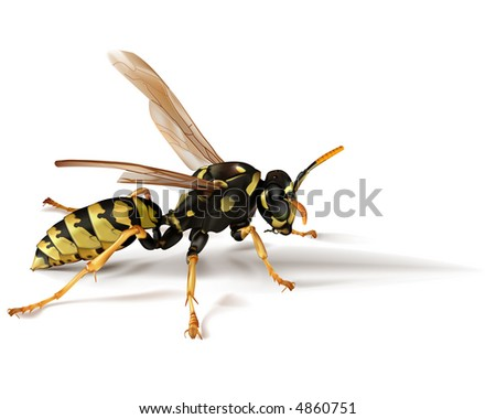 types of paper wasps