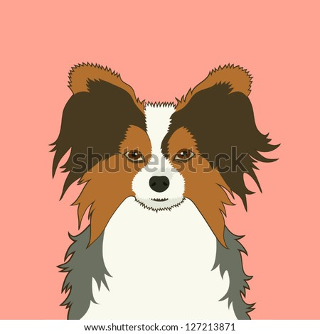 Papillon, The buddy dog