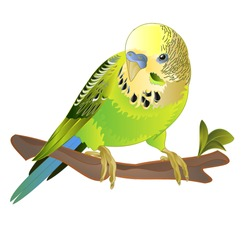 Parakeet green Budgerigar home pet ,   or budgie or shell parakeet  on a white background watercolor vintage vector illustration editable hand draw