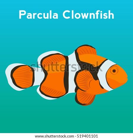 parcula clownfish  exotic fish