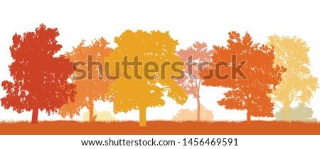 park in autumn  beautiful