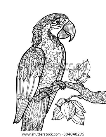 parrot ara macao  exotic bird