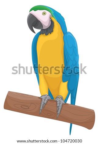 Parrot bird vector illustration