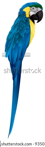 parrot  blue and yellow or blue