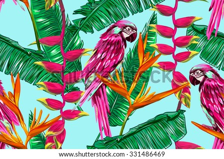 parrot  exotic birds  tropical