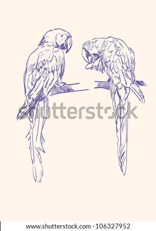 Parrot isolated hand drawn vector llustration