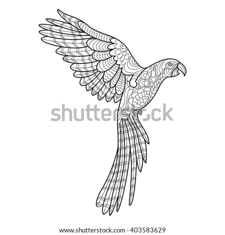Parrot Macaw Bird Coloring Book For Adults Vector