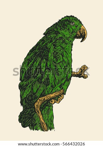 parrot on a branch. engraving...