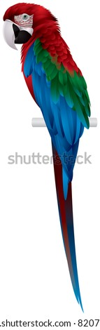 parrot  red and green macaw