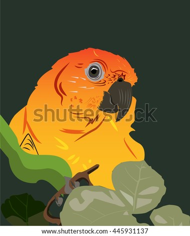 parrot sun conure in the wood