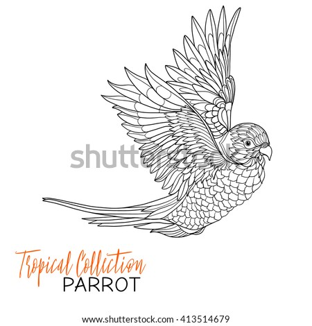 parrot tropical bird vector