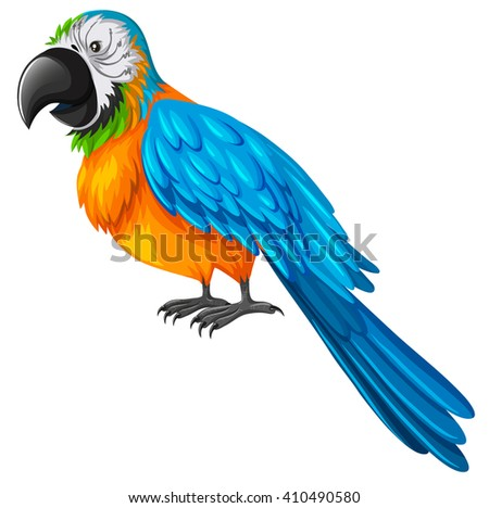 parrot with yellow and blue