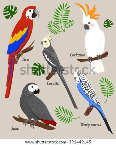 parrots cartoon vector