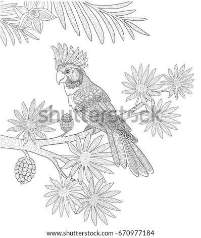 parrots cockatoo and tropical