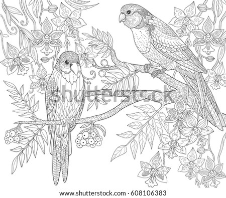 Parrots sit on a branch in the jungle, adult coloring book page. Doodle tropical birds vector illustration.