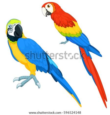 parrots vector set
