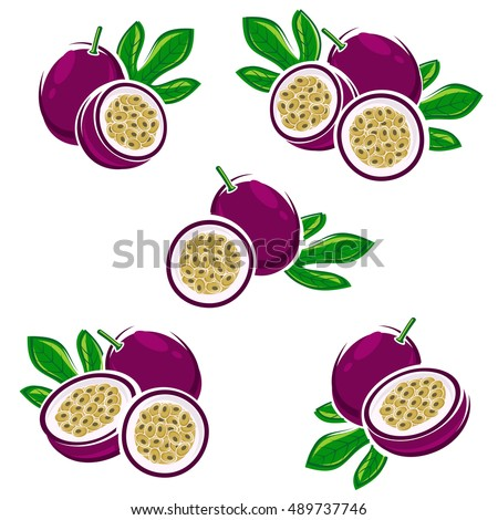 passion fruit set vector