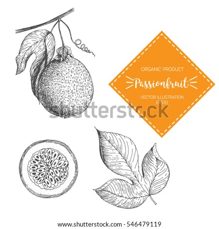 Passion Fruit vector illustration. Hand-drawn design element. A fruit drawn in vintage style #546479119