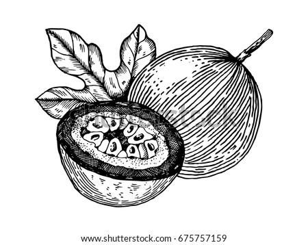 Passion fruit vector illustration. Scratch board style imitation. Hand drawn image. #675757159