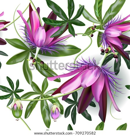 passionflower tropical flowers