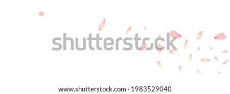 Pastel Apple Petal Vector White Background. White Fall Peach Petal Design. Cherry Petal Springtime Cover. Floor Lotus Petal Banner.