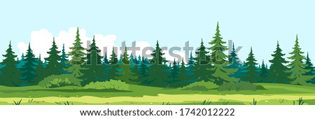 Path along spruce forest with big green trees, tourist route near the dense spruce forest and bushes in summer sunny day nature illustration background