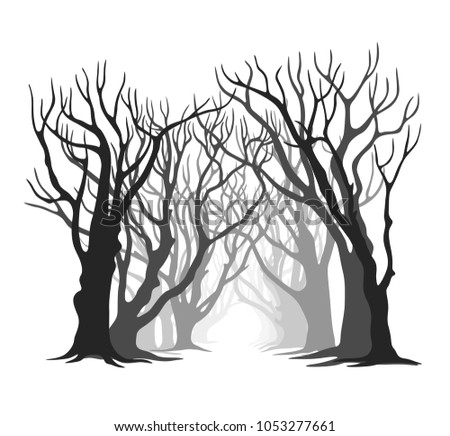 pathway of trees without leaves