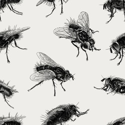 pattern of the big flies