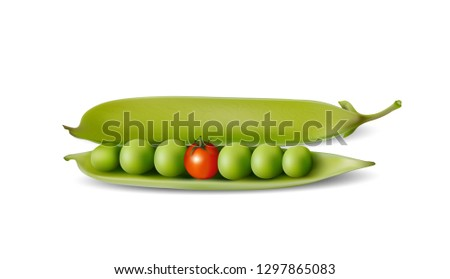 Pea, sugar pea, opened pea pod with tomato, Genetically modified foods, Vector illustration isolated on white background