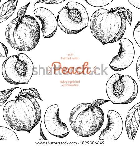 peach fruit sketch frame  hand