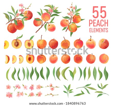 Peach Fruit watercolor element set. Isolated peaches collection of fruits, leaves, slices on white.  Botanical elements for design, cover, wedding cards, party invitation , backdrop