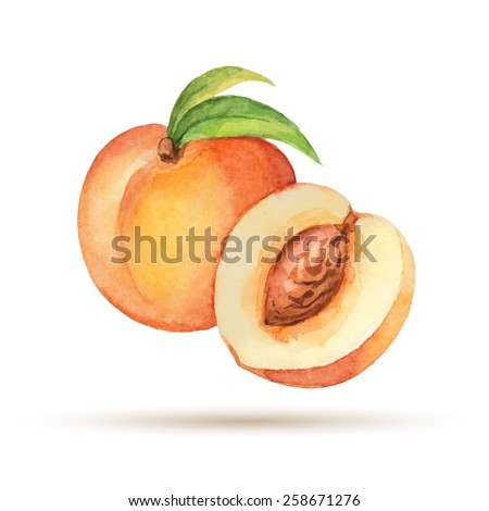 peach hand drawn watercolor  on