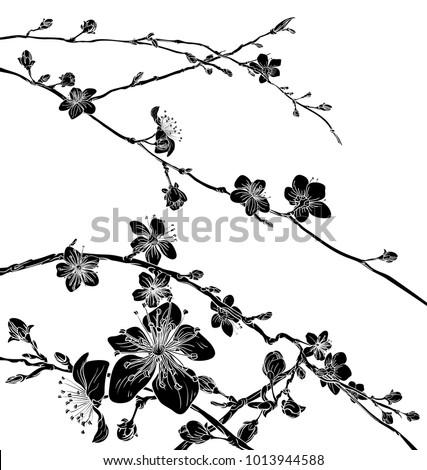 peach or cherry blossom flowers