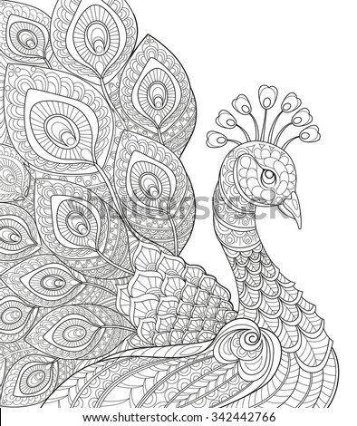 Shutterstock Peacock. Adult antistress coloring page. Black and white hand drawn doodle for coloring book