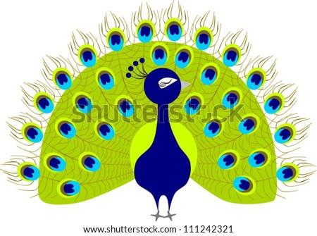 Cute Peacock Drawings Peacock Clipart