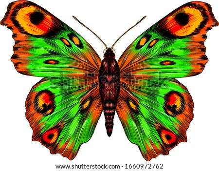 peacock eye fabulous barcode beautiful Urania Madagascar vector illustration green yellow orange butterfly Zdjęcia stock ©