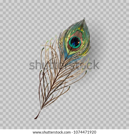 peacock feather on transparent