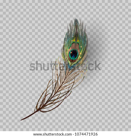 Peacock feather on transparent background in realistic style vector illustration