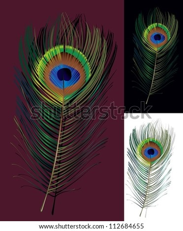 Peacock feather. The vector illustration of a peacock feather on different backgrounds. The symbol of art and beauty.